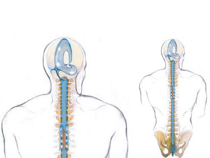 Ilustração sobre a terapia de craniossacral
